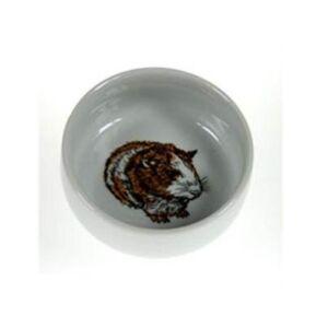 guinea-pig-bowl